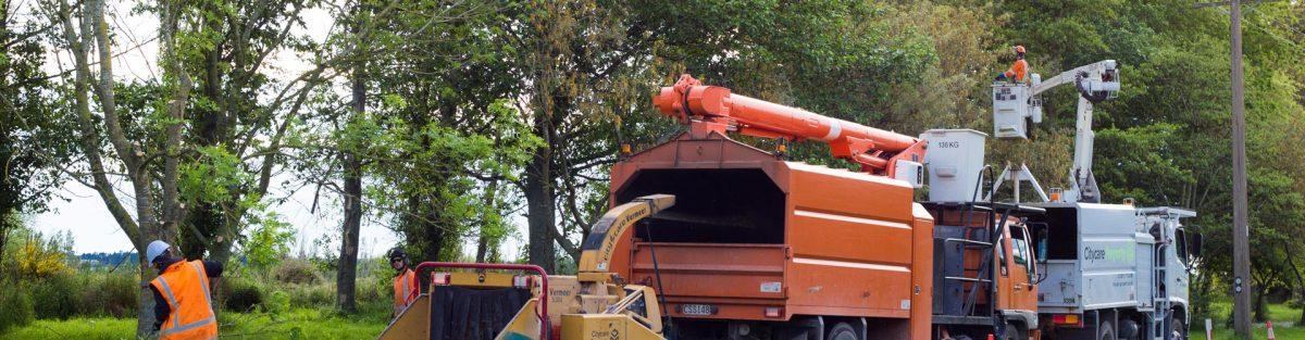 tree removal slider