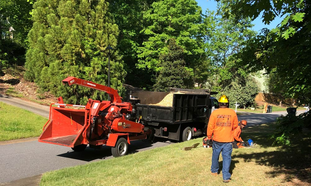 tree-service-rosell-specialists