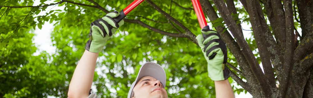 tree service roswell