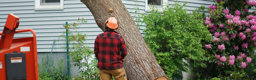 tree removal services roswell